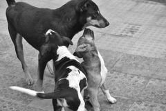 Dog3 Royalty Free Stock Photo