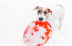 Dog playing outdoors stock image
