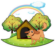 A dog playing outside the doghouse near the apple tree Stock Photos