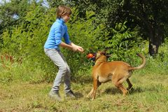 Young Girl Playing With Her Pet Belgian Shepherd. Dog Playing With Owner. Young Girl Playing With Her Pet Belgian Shepherd. Dog And Owner, Outdoor. Belgian Stock Photo