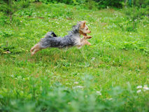 Dog playing in the park Stock Photography
