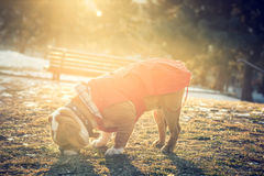Dog playing in the park Stock Photos