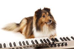 Dog playing the piano Royalty Free Stock Photos
