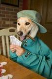 Dog Playing Poker. Dog sitting at table playing poker with human hand.   Humorous Stock Photo