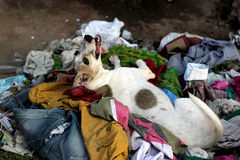 Dog Playing in The Rubbish Stock Images
