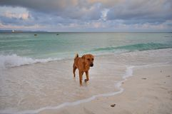 A dog playing in the sea royalty free stock photo