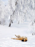 Dog playing in snow. Royalty Free Stock Photo