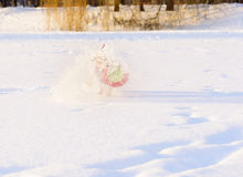 Dog playing with toy making splashes of snow Stock Image