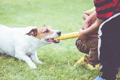 Dog playing tug of war game against two children Royalty Free Stock Images