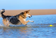 Dog playing in the water Stock Photos