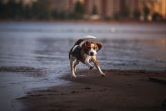 Dog playing in water stock image