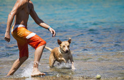 Dog playing in the water with its master Stock Photos