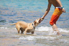 Dog playing in the water with its master Royalty Free Stock Photos