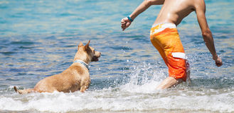 Dog playing in the water with its master Stock Photo