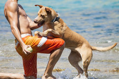 Dog playing in the water with its master Stock Image