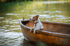 Dog playing in water Stock Photo