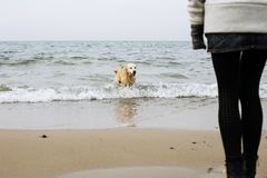 Dog playing in water royalty free stock photography