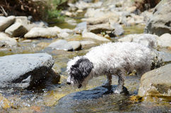 Dog playing with the  water in the river Stock Image