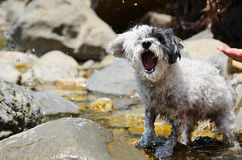 Dog playing with the  water in the river Royalty Free Stock Photography