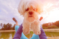 Free Dog Playing With His Owner Stock Images - 97531654
