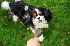 Free Dog Playing With His Owner With Toy On The Walk. Royalty Free Stock Image - 136565306