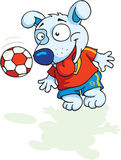 Dog plays football Royalty Free Stock Images