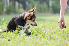 Dog plays with the girl. Royalty Free Stock Photos