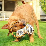Dog plays Stock Image