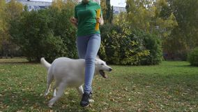 The dog plays with the owner, performs the trick. White Swiss Shepherd dog runs between the owner`s legs behind a rubber