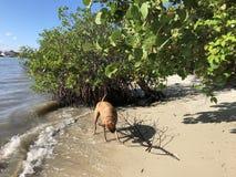 dog plays with a stick on the beach Stock Photos