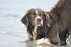 Dog plays in water Stock Photo