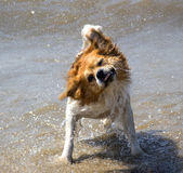 Dog plays in the water Royalty Free Stock Photography