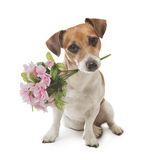 Dog pleasant surprise flower stock photography
