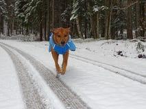 Dog on the plowed road near Jachenau Stock Photos