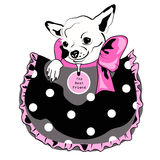 Dog in pocket. Black, pink and white drawing Royalty Free Stock Images