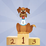 Dog on podium Stock Image
