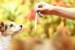 Dog& x27 ; point de vue de s Photographie stock libre de droits