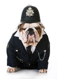 Dog police or catcher. English bulldog dressed up like a policeman on white background Royalty Free Stock Photography