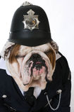 Dog police or catcher Stock Image