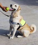The dog-policeman . Royalty Free Stock Photography