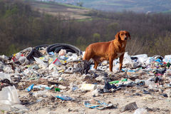 A dog between the polluted nature and beautiful la Stock Photography