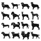 Dog, pooch, breed, and other web icon in black style.Dalmatian, shepherd, terrier, icons in set collection. Dog, pooch, breed, and other  icon in black style Stock Images