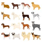 Dog, pooch, breed, and other web icon in cartoon style.Dalmatian, shepherd, terrier, icons in set collection. Dog, pooch, breed, and other  icon in cartoon Royalty Free Stock Images