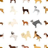 Dog, pooch, breed, and other web icon in cartoon style.Dalmatian, shepherd, terrier, icons in set collection. Dog, pooch, breed, and other  icon in cartoon Stock Photos