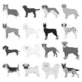 Dog, pooch, breed, and other web icon in monochrome style.Dalmatian, shepherd, terrier, icons in set collection. Dog, pooch, breed, and other  icon in Royalty Free Stock Image