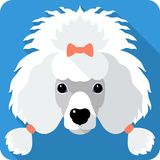 Dog Poodle icon flat design Royalty Free Stock Image