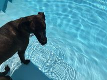 Dog in pool Stock Image