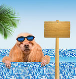Dog in the pool Stock Image