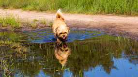 Dog in a pool of water Stock Image