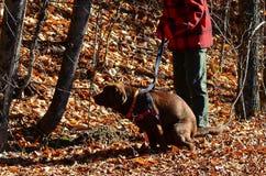 Dog pooping Royalty Free Stock Image